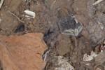 Uloboridae ? - 5 mm - May It - 20.3.15