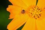 Araneae - 7 mm - Sagada - 4.12.13